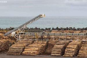 三季度全球各大木材行业公司盈利均出现大幅下滑!