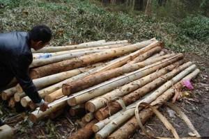 我国木材盗伐的法律责任
