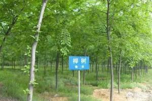 南北榆木、新老榆木、真假榆木,怎么区分?