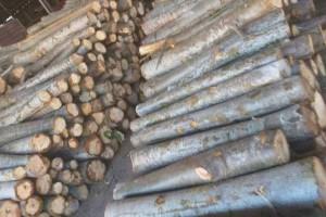 大量轻木原木厂家直销