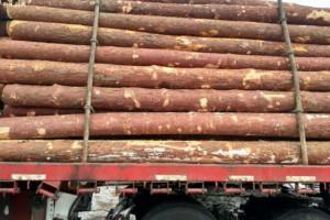 白俄罗斯木材巨头今年前9月出口8900万美元