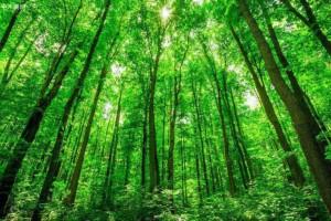 中国森林保险规模全球第一