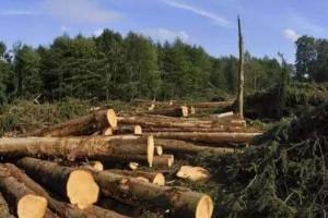 预计未来芬兰原木木材价格将有所下降