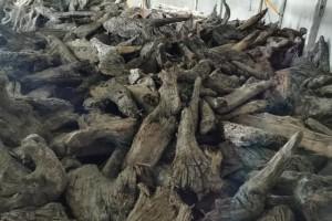 购买金丝楠原材料需要先了解什么?