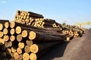 加拿大铁路罢工结束,软木木材价格温和上涨