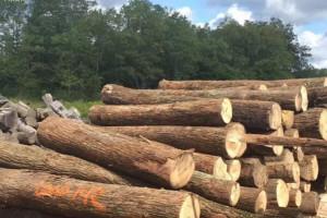 未来美国木材需求整体保持稳定