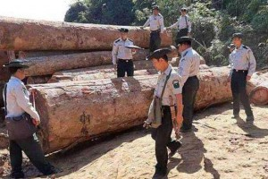 走私猖獗 缅甸实皆省一年木材走私量近万吨