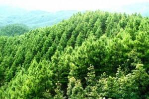 """安庆市太湖县践行""""两山""""理念推动林业高质量发展"""