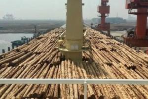 预计到2025年,曹妃甸进口木材达到500万立方米