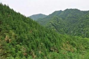 杉木种植最易忽略的四大误区,做到这四点,就是会种杉木的农民