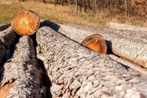云杉树皮甲虫爆发和风暴导致欧洲木材产量和出口量增加