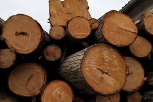 贵州红椿木原木长期供应