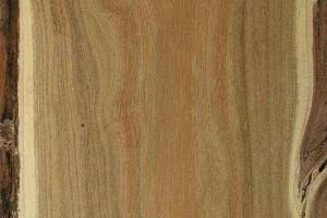 洋槐木硬度和红木差不多,花纹美观,为什么很少做家具?