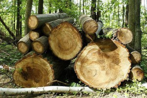 木质家具如何延长寿命?木材防腐技术介绍