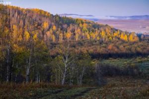 大兴安岭规模以上工业林业企业实现稳增长