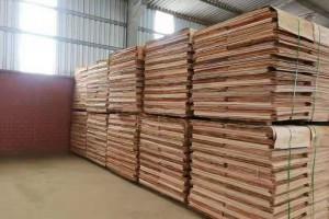 广西桉木板皮单板生产厂家实物视频