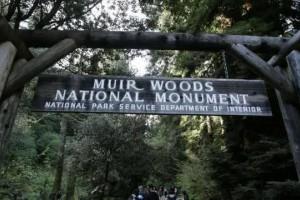 公园巨大红杉树突然倒下,美国游客被砸死砸伤!悲剧