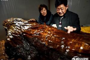 埋在地下几千年的楠木值钱吗?