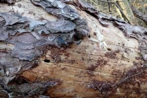 2019年黔东南州全面完成松材线虫病疫木检疫执法工作