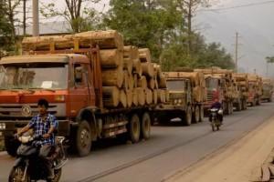 缅甸木材走私稽查力度大!20天上千吨走私木材被查