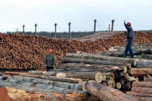 2020年中国木材缺口巨大!木材人如何破城