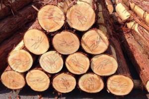日本利用国产原木木材推进胶合板产业发展的三种企业战略