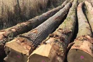 法国欧橡原木价格多少钱一立方米