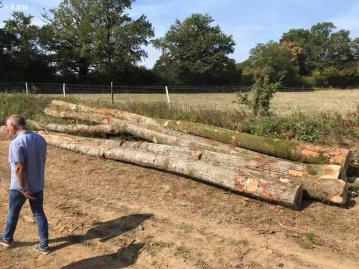 法国欧橡原木价格多少钱一立方米厂家