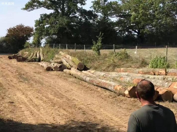 法国欧橡原木价格多少钱一立方米加工