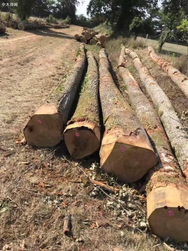 法国欧橡原木价格多少钱一立方米图片
