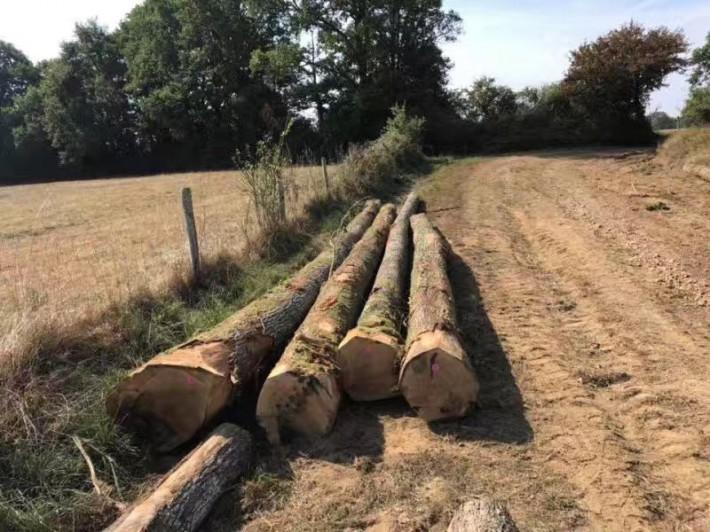 法国欧橡原木价格多少钱一立方米品牌