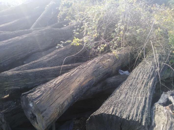 阴沉木价格多少钱一斤