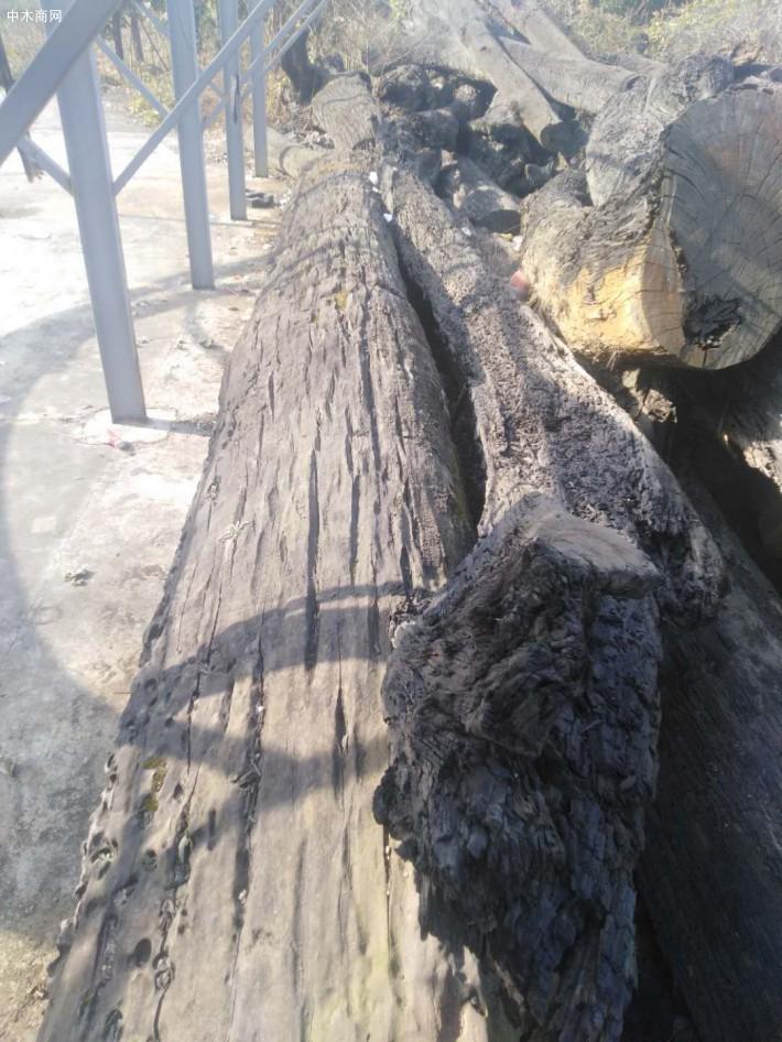 阴沉木价格多少钱一斤品牌