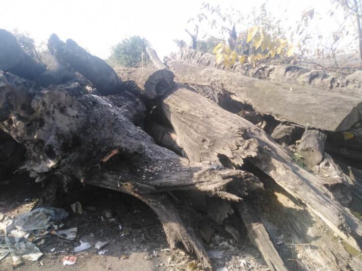 阴沉木价格多少钱一斤供应