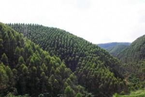 广西力争2020年实现林业总产值突破7000亿元