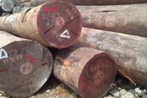 木材市场上常见的十大非洲硬木种类是哪些?