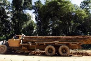 瑞士将禁止非法砍伐木材交易