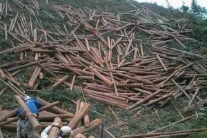 杉木檩条价格多少钱一立方米_2020年1月16日