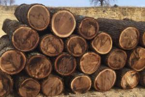 胡桃木是什么树种,胡桃木质量怎么样?