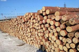 全球木材行情2019年主要木材进口国的库存都高于平均水平