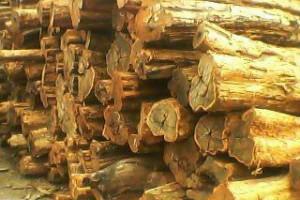 优质乌木原木批发
