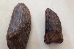 沉香木是如何形成的?为什么沉香木燃烧会有香气?