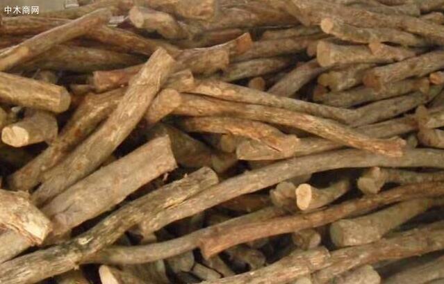 黄杨木是该属的代表性物种