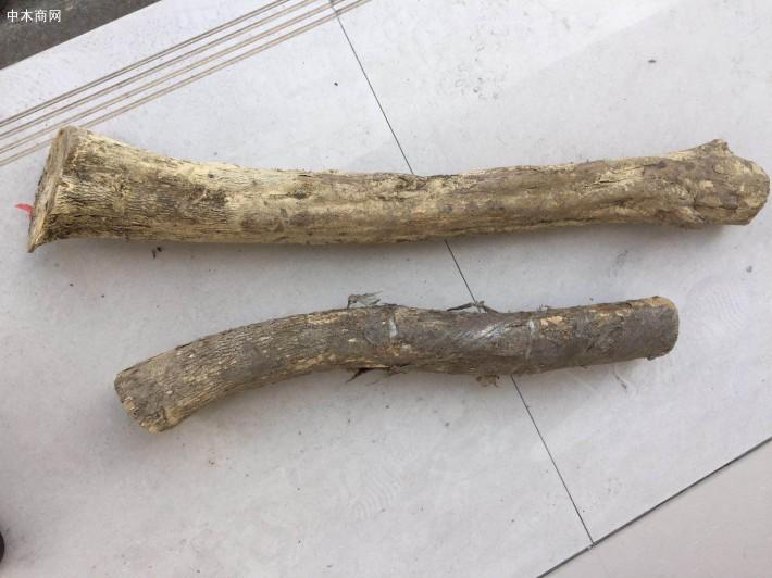 小叶高山黄杨木原木用于根雕和摆件价格