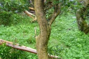 黄杨木料和阴沉木料的区别在哪里?