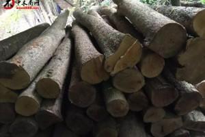 金丝楠原材料可定制各种规格新料,陈料,老房料,阴沉木