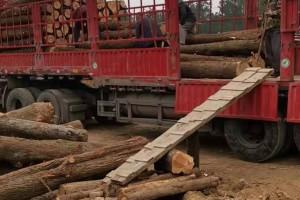 长期大量出售黄心柏木原木现货视频