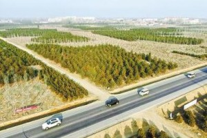 """雄安新区""""千年秀林""""已累计造林31万亩"""