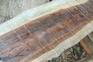 四川成都批发供应紫油木,云南清香木,虎斑檀原木