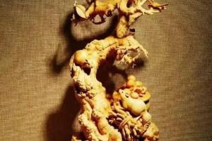 「千年难长黄杨木」的黄杨木木雕值钱吗?